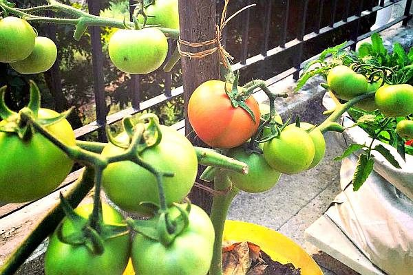 Organic Gardening For The Urban Home Pure Eco India