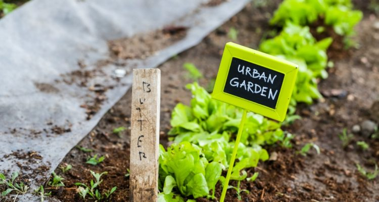 Urban Gardening Pure Eco India
