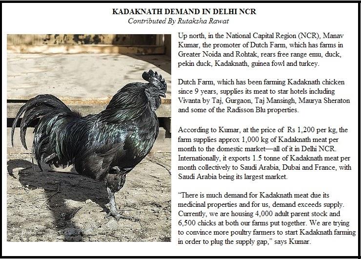 kadaknath box 2